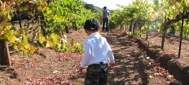 cooper-james-checks-out-the-vineyard-row-by-row-2