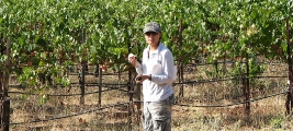 cynthia-kummer-caught-tasting-grapes-callecielovineyard