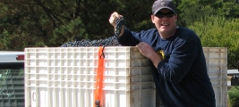 shawn-kummer-shows-off-the-grapes-on-his-way-to-crushpad