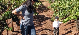 calle-cielo-vineyard-cynthia-cooper-kummer-vineyard-inspection